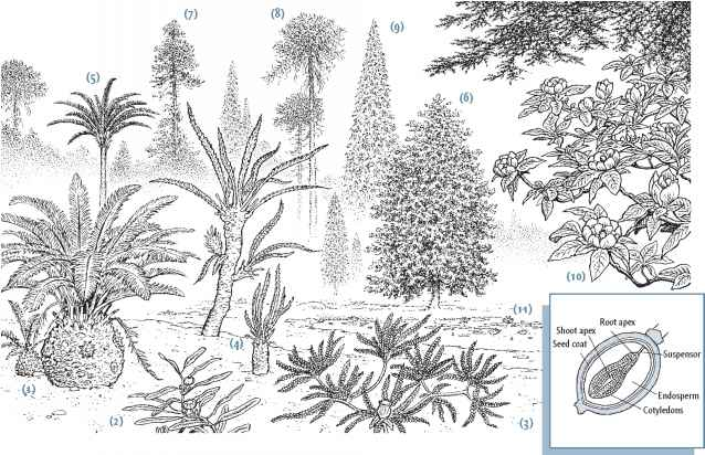 Triassic Plants Pictures