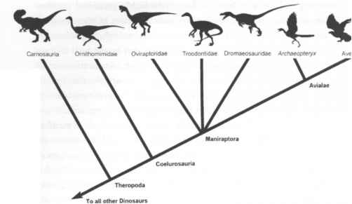 Cladogram Dinosaurs Birds Simple