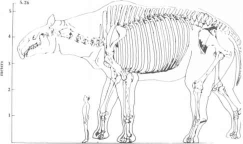 Indricotherium Skeleton Reconstruction