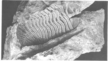 Fossil Cast Rock