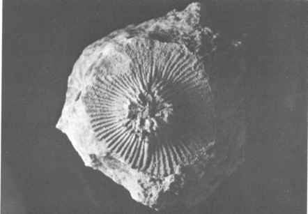 Mold Fossil