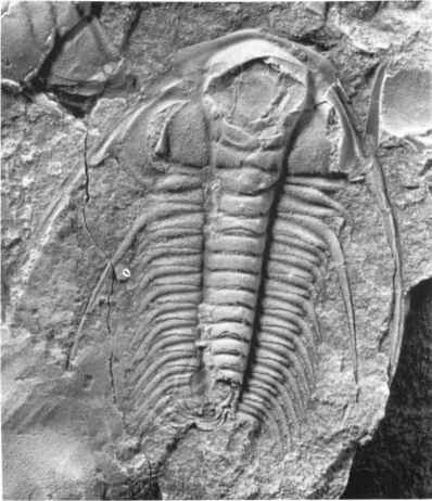External Mold Paradoxides