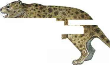 Thylacoleo Carnifex Pictures