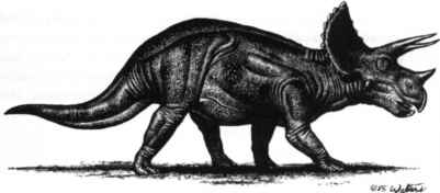Triceratops Walters